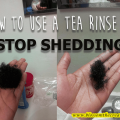 how to use a tea rinse to stop shedding